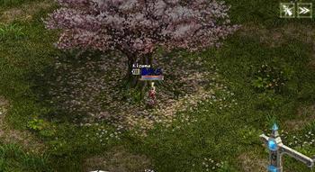 さくらの木の下で。.JPG